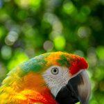 Parrot Bird Perched Animal  - flutie8211 / Pixabay